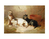 Three Terriers Giclee Print by George Armfield