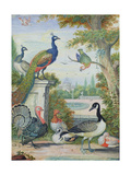 Exotic Birds and Domestic Fowl in a Picturesque Park, Early 18th Century Giclee Print by Jakob Bogdany