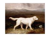 Charles Brett's White English Setter 'sam' in a Moorland Landscape, 1836 Giclee Print by Abraham Cooper