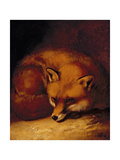A Fox, 1817 Giclee Print by Abraham Cooper