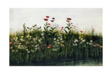 Poppies, Daisies and Thistles on a River Bank Giclee Print by Andrew Nicholl