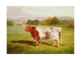 Portrait of a Shorthorn, 19th Century Giclee Print by William Joseph Shayer