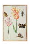 Pd.109-1973.F24 Two 'Broken' Tulips, a Beetle, a Snail and Two Butterflies Giclee Print by Nicolas Robert