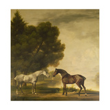 A Grey and a Bay in a Landscape Giclee Print by George Stubbs