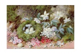 Still Life with Bird's Nest Giclee Print by William Cruikshank