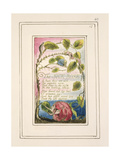 The Sick Rose: Plate 40 from 'Songs of Innocence and of Experience' C.1802-08 Giclee Print by William Blake