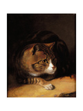 A Tabby Cat, 1817 Giclee Print by Abraham Cooper
