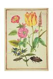 Pd.109-1973.F23 Flower Studies Giclee Print by Nicolas Robert