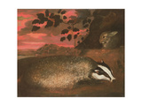 Badger, 17th Century Giclee Print by Francis Barlow