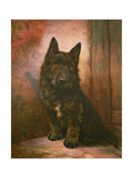 Scottie Puppy Giclee Print by Lilian Cheviot