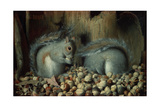 The Gluttons (Squirrels) Giclee Print by Joseph Decker