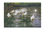 White Ducks on Water Giclee Print by Franz Grassel