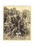 Study of a Flax Bush with a Native Boy on the Wairere River, 1869 Giclee Print by Daniel Louis Mundy