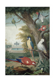 Parrots and a Lizard in a Picturesque Park, Early 18th Century Giclee Print by Jakob Bogdany