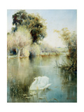 The Monarch of the Lake Giclee Print by David Woodlock