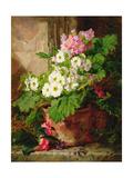 Still Life of Primulas Giclee Print by Martha Darley Mutrie