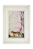 The Tyger: Plate 43 from 'Songs of Innocence and of Experience' C.1802-08 Lámina giclée por William Blake