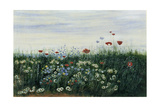 Poppies, Daisies and Other Flowers by the Sea Giclee Print by Andrew Nicholl