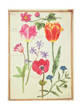 Pd.109-1973.F40 Flower Studies Giclee Print by Nicolas Robert