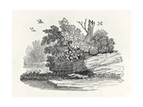 Fox Escaping, from 'The General History of Quadrupeds', Published 1790 Giclee Print by Thomas Bewick