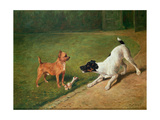 Fighting over a Bone Giclee Print by John Emms