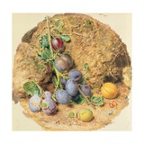 Plums Giclee Print by William Henry Hunt