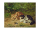 Kittens and Snail Giclee Print by Alfred Brunel De Neuville