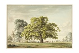 A Walnut Tree at Denton, Near Grantham Giclee Print by Anthony Devis
