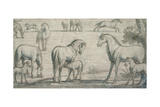 Mares and Foals, 17th Century Giclee Print by Francis Barlow