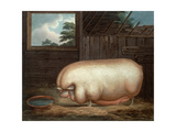 """""""This Remarkable Animal..."""", Engraved by John Whessel (C.1760-1823), 1808 Giclee Print by Benjamin Gale"""