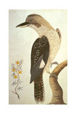 Laughing Kookaburra, from 'Birds and Flowers of Port Jackson', 1789 Giclee Print by George Raper