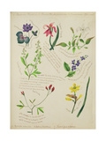 Wild Flowers Giclee Print by Lili Cartwright