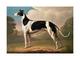 Greyhound, 1800 Giclee Print by Benjamin Killingbeck