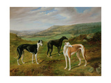 Greyhounds Giclee Print by Benjamin Cam Norton