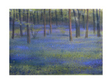 Bluebell Wood Giclee Print by Edward Clifford
