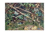 A Bird's Nest Among Brambles, Honeysuckle and Undergrowth, 1858 Giclee Print by John Sherrin