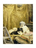 Three Dogs Giclee Print by Charles Van Den Eycken