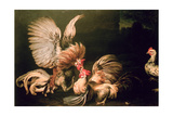 Fighting Cocks Giclee Print by Frans Snyders Or Snijders
