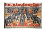 Barnum and Bailey Circus Poster Giclee Print