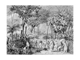 T1242 the Chinese Tea Plantation in the Botanic Gardens at Rio De Janeiro, Engraved by Leon Jean… Giclee Print by Johann Moritz Rugendas