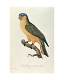 Blue-Capped Parrot by Jacques Barraband (1767-1809) Giclee Print by Jacques Barraband