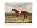 'Spaniel', the Winner of the Derby Stakes at Epsom, 1831, Engraved by Charles Hunt (1803-77),… Giclee Print by John Frederick Herring I