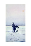 Emperor Penguins and Chick Giclee Print by Edwin Wilson