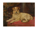 A Terrier on a Settee Gicléetryck av Wright Barker