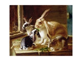 Long-Eared Rabbits in a Cage, Watched by a Cat Giclee Print by Horatio Henry Couldery