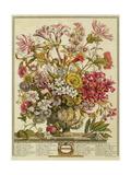 October, from 'twelve Months of Flowers' by Robert Furber (C.1674-1756) Engraved by Henry Fletcher Giclée-tryk af Pieter Casteels