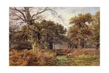 Sherwood Forest Giclee Print by J. Hudson Willis