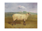 A Prize Ewe with Monogram 'H', Belonging to Mr J.A. Houblon, Hallingbury Place, Essex, 1812 Giclee Print by Abraham Cooper