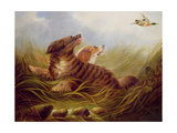 Spaniels Thrashing Giclee Print by George Armfield