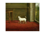 Portrait of a Jack Russell Terrier (In Regency Interior) 1814 Giclee Print by William Henry Davis